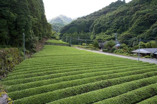 お茶の山輝園