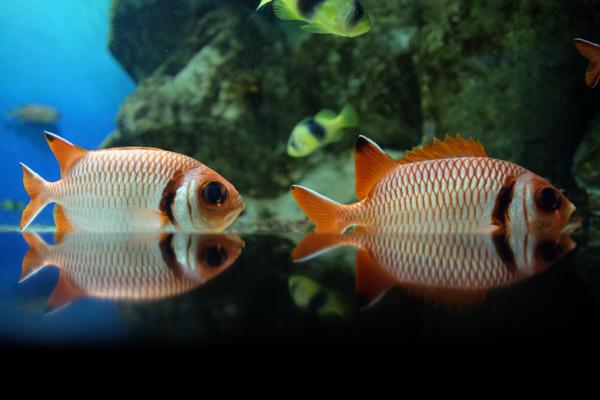 ひとモノコトつながるデザインプロジェクト・市立しものせき水族館「海響館」