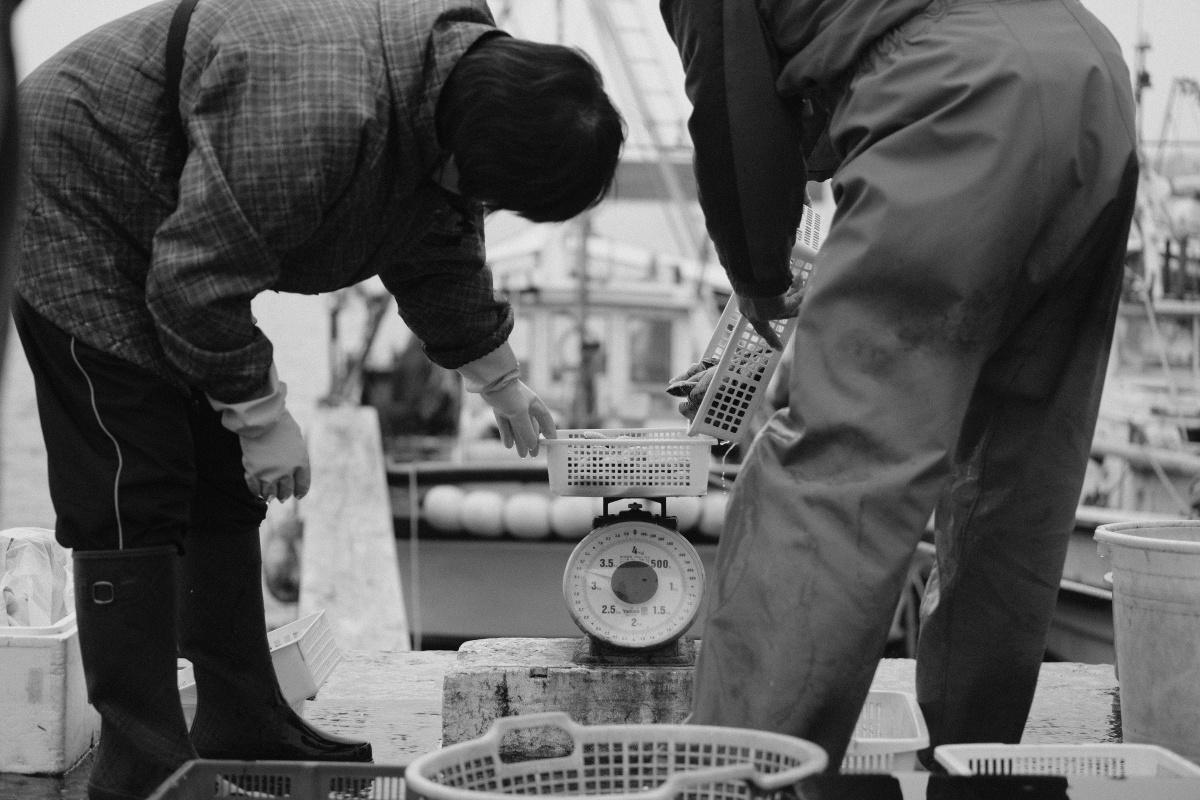 テレビで紹介されてから価格が高騰した宇部のワタリガニを宇部港浜売りで漁師さんとの会話を愉しみながら買ってみよう!