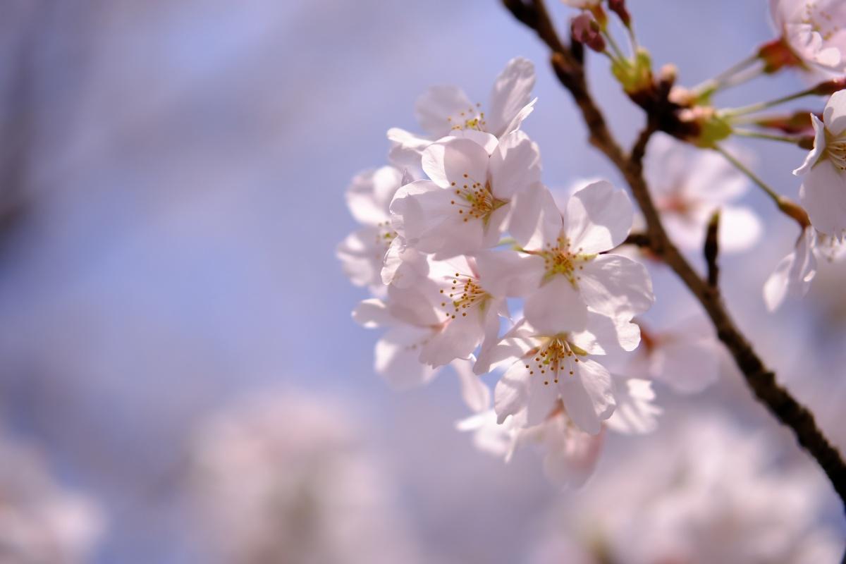 桜のキレイな維新公園で時間調整中!ゴールデンウィークでの工事に向けて現場打ち合わせ!ランチは野菜ソムリエの柳井さつきさんとチャイニーズキッチン貴でランチ!