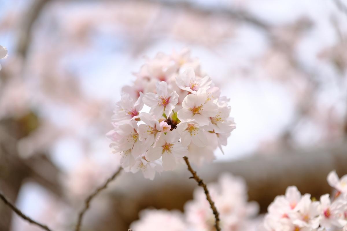 4月1日新しい生活が始まる!手伝ってくれたから「祝30周年・神戸JEJE」のステーキをご馳走するよ!