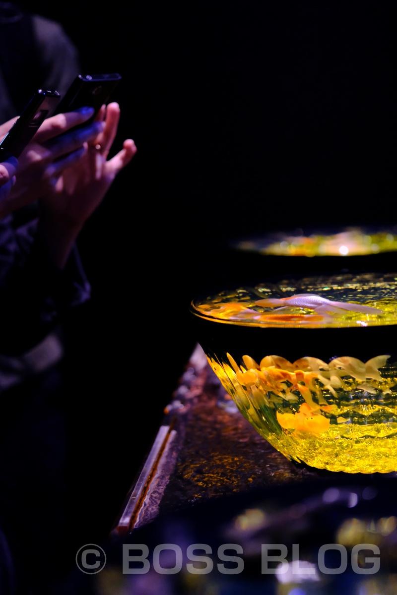 ゴールデンウィーク中に人が多すぎてアクアリウムの金魚を撮るよりも人を撮るのが面白くなる!