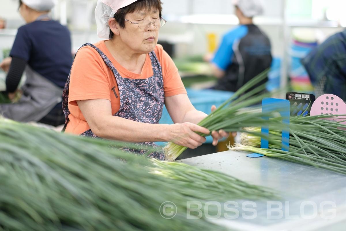 ぶちうま!アンバサダー!野菜ソムリエ上級プロのさつきがゆく!おのだネギ三昧!