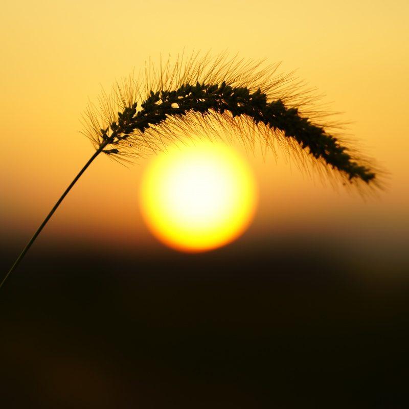 インスタ映え間違い無しのお花畑で夕陽を撮ってみよう