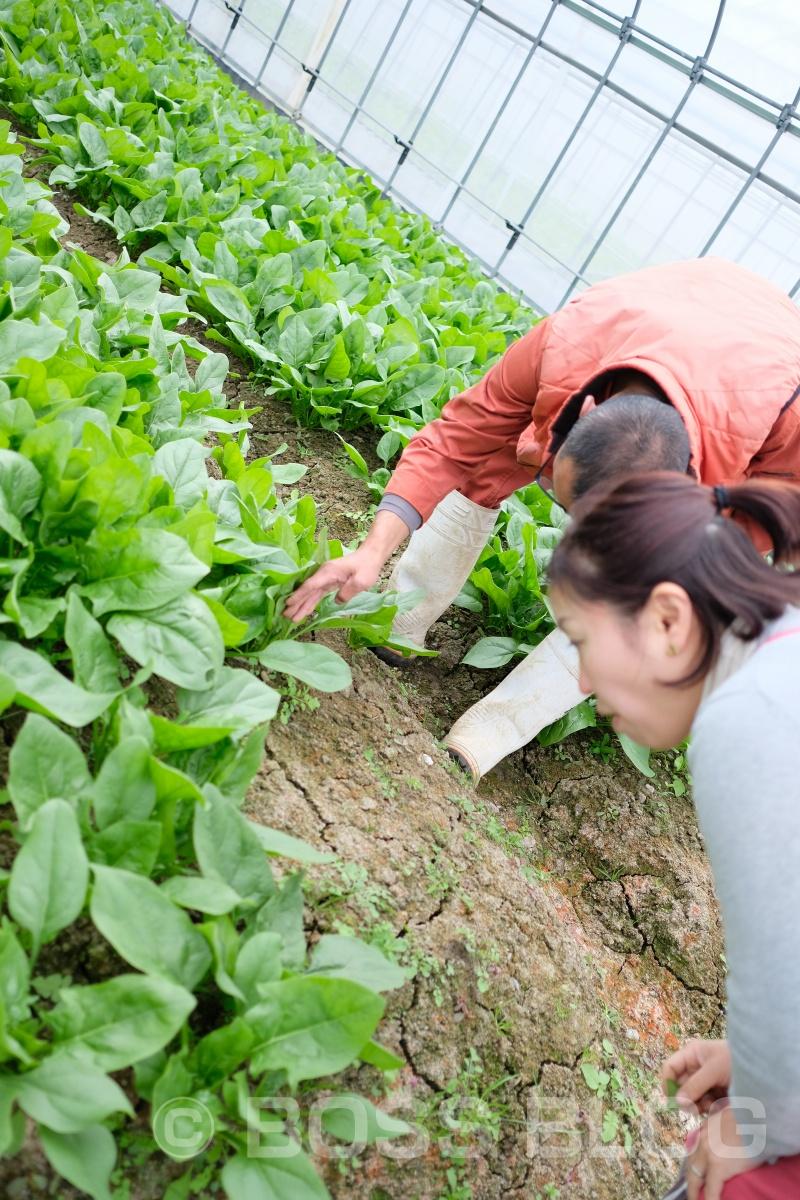 ふくぷくファームは山口県周南市鹿野のたくさんの自然に囲まれた高原地にある農場です。