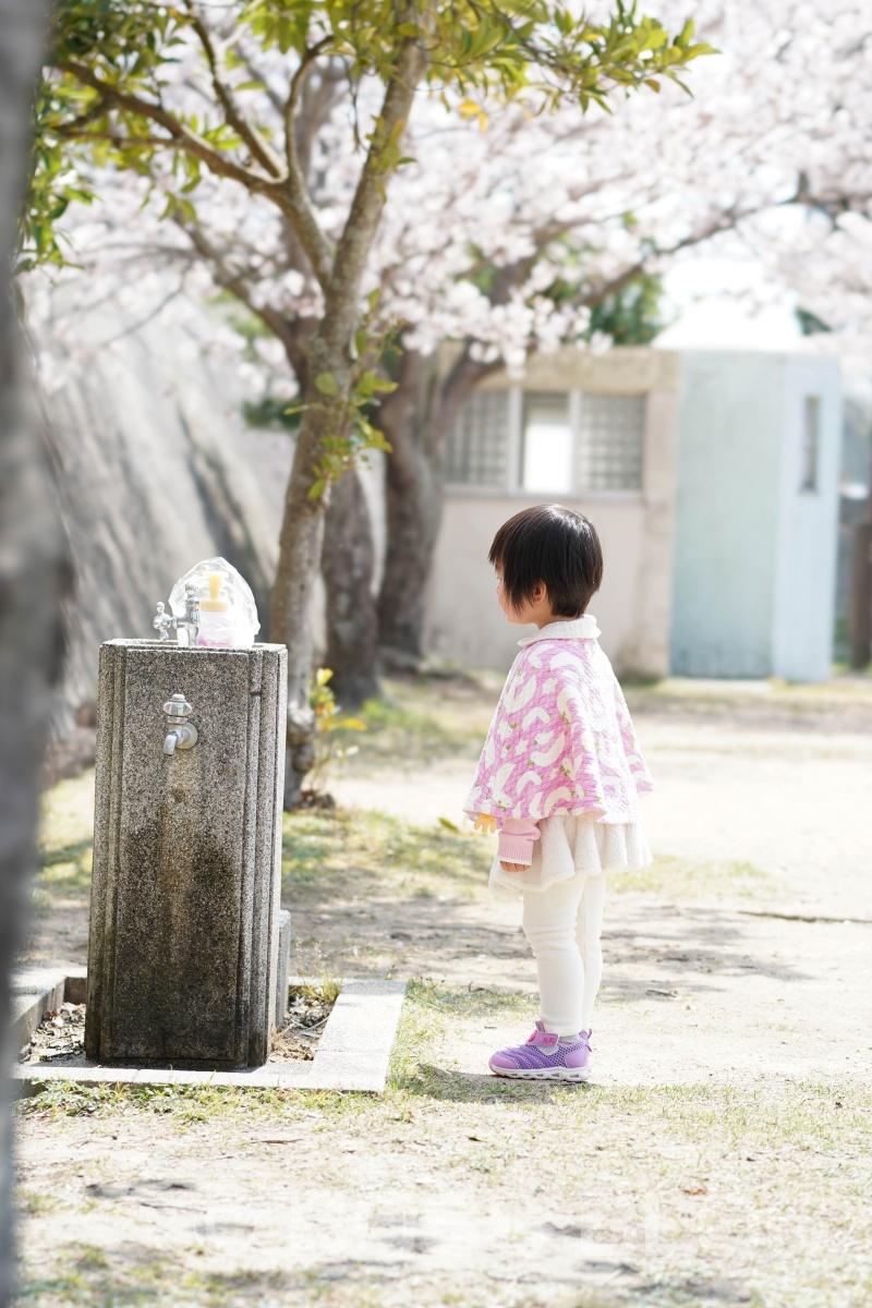 姫ちゃんと桜デート